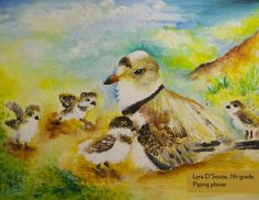 Art Contest Semifinalist, Grades 6-8: Piping plover, Lyra D'Souza, Age 13, Waldorf Middle School
