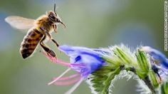 Bees, birds, butterflies and beetles are among a growing list of pollinator species in jeopardy of global extinction, a United Nations study warns, a…
