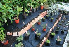 Pflanzen auslegen Garden Bridge, Sweet Home, Outdoor Structures, Plants, Diy, Tricks, Gardening, Ideas, Fountain Garden
