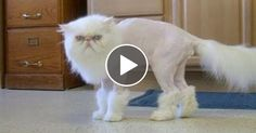LAUGH LIKE NEVER BEFORE - Funniest ANIMAL compilation