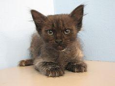 Gizmo - Oregon Humane Society
