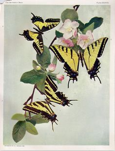 book collection of botanical & butterfly printables  I want some of these, they remind me of my Gram.