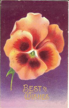 Vintage Best Wishes Pansy Postcard, ca. 1910s