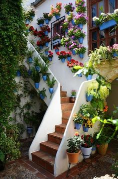spain flowers, luvly but can you imagine the watering? haha