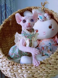 Cute Funny Animals, Cute Cats, Kittens Cutest, Cats And Kittens, Cute Hairless Cat, Animals And Pets, Baby Animals, Sphynx Cat Clothes, Cat Climbing