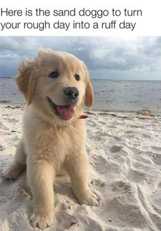 Allow your eyes a short break from the cringe and look at this adorable sand doggo!