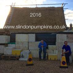 #mural #pumpkins #slindonpumpkins #slindon #2016 #www.slindonpumpkins.co.uk #sussexwildlifetrust #pumpkin festival