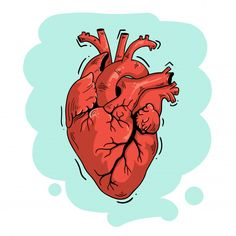 Art And Illustration, Love Heart Illustration, Wallpaper Corazones, Anatomical Heart Drawing, Medical Wallpaper, Heart Artwork, Heart Sketch, Medical Art, Anatomy Art