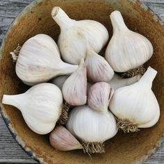 Georgian Crystal Garlic