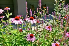 Summer blooms at The Cove!