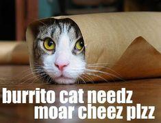 burrito cat!
