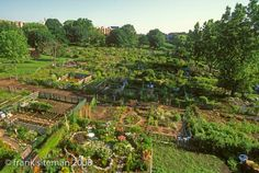 Fenway Victory Garden in Boston from the air. The oldest remaining victory garden in the US. // Great Gardens & Ideas //