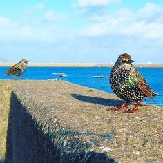 【michelletheslydog】さんのInstagramをピンしています。 《鳥と海🌊その1🚀 ##birds #sea #harbour  #dunlaoghaire #ireland #鳥 #海 #港 #ダンレアリー #アイルランド》