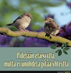 Friendship, Quotes, Inspiration, Animals, Quotations, Biblical Inspiration, Animales, Animaux, Animal