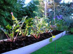 Cómo hacer un jardín colgante con canal. - Vida Lúcida
