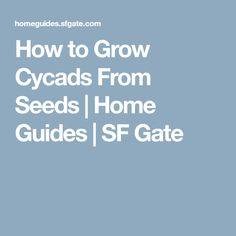 How to Grow Cycads From Seeds   Home Guides   SF Gate
