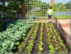 FIELD TRIP!!! Chicago Botanic Garden Is Fantastic All Year Long - Shawna Coronado