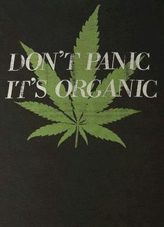 Buy top quality Cannabis Seeds from Seedsman. Our range of marijuana seeds is one of the largest online, with more than 3000 varieties of Cannabis Seeds. Marijuana Plants, Cannabis Plant, Marijuana Art, Marijuana Funny, Cannabis Oil, Medical Marijuana, Weed Quotes, Weed Memes, Stoner Quotes