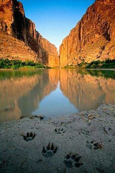 Canine or feline mud paw print canyon reflection photo color