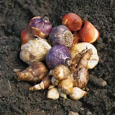 Planning your spring bulb garden #springgarden #springbulbs http://sulia.com/my_thoughts/b3513564-2136-438a-bd54-46aadcf9e92a/?source=pin&action=share&btn=big&form_factor=desktop