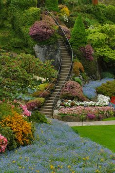 41 Butchart Gardens, Victoria B.C.   Butchart Gardens has 55 acres of carefully landscaped gardens. Butchart Gardens is about 10 km outside of Victoria, B.C. The garden is currently full of tulips and spring bulbs, plus Anchusa and Forget Me Nots