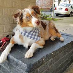 COCO + PISTACHIO saved to #COCOANDPISTACHIO Fine Pet Accessories   Handcrafted in New York