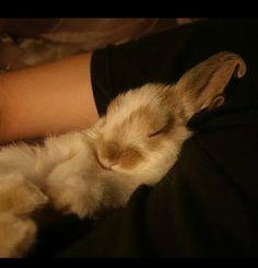 Bunnies - Sleepy bunny...