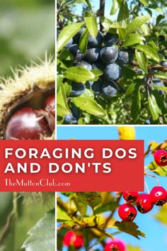 The delights of foraging! Check out what natural foods you can find if you go foraging in the woods in the autumn in the UK. A veritable treasure trove! Read this now or pin for later! Stuff To Do, Fun Stuff, Natural Foods, Woods, Autumn, Club, Female, Check, Free