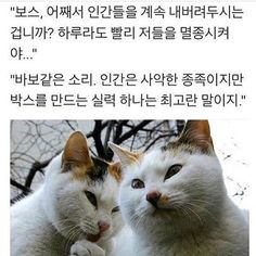 ??? : 스승님 뭐하고 계신가요? | 유머 게시판 | 루리웹 모바일 Animals And Pets, Cute Animals, Funny Memes, Hilarious, Yolo, Selfies, Cool Cats, Overwatch, Funny Cats