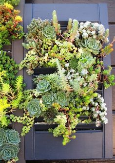 Succulent Wall and how to propogate