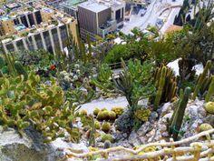 Jardin Exotique De Monaco...: http://www.facebook.com/media/set/?set=a.10200218167909620.1073741883.1014978408&type=1&l=a48ecc2db9