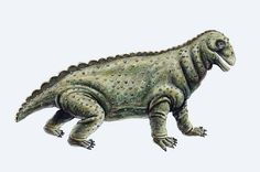Moschops | ... ebooks dinosaur jungle other prehistoric animals moschops moschops