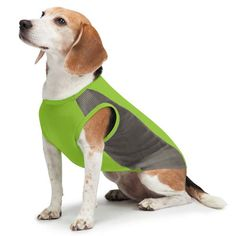 Insect Shield Dog Mesh Tank Top-SALE   KeepDoggieSafe.com – Keep Doggie Safe