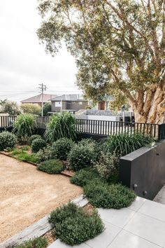 Australian Garden Design, Australian Native Garden, Coastal Gardens, Beach Gardens, Small Courtyard Gardens, Outdoor Gardens, Outdoor Landscaping, Front Yard Landscaping, House Landscape
