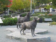 The Newfoundland and Labrador Dogs immortalized in Bronze! Newfoundland Canada, Newfoundland And Labrador, Labrador Dogs, Labrador Retrievers, St John's, Bronze, Park, Animals, Labrador Retriever