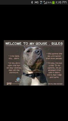 I love my pitbull!!