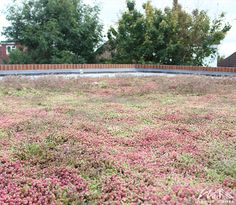 Wild About Roofs - Sedum roof #WildAboutRoofs #GreenRoofs #nature #green #mothernature #beautiful #garden #plants #naturelover #lovenature #earth #roofing #roofs #newhome #decoration #environment