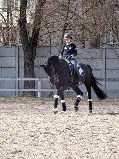 Dressage in Ukrain. Dressage stallion. Dressage training.
