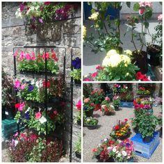 Fresh flowers Main Street, Fresh Flowers, Farmers Market, Plants, Plant, Planets