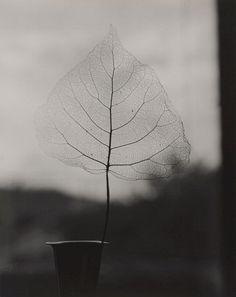 Poetic  Leaf, window, black 8 white