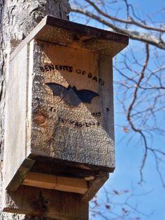 Bat House Plans - Conseils pour construire une maison Bat Et Attirer les chauves-souris à votre jardin
