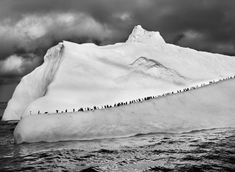 Sebastião Salgado's Genesis - such a cool book of photography