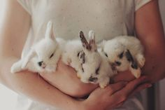 OMG LOOK AT THEM I COULD KISS AND CUDDLE THEM FOR HOURS ON END LOOK AT THEIR LITTLE FLUFFY EARS OMFG WHAT DID WE DO TO DESERVE THE BEAUTIFUL HOLINESS WHICH ARE RABBITS
