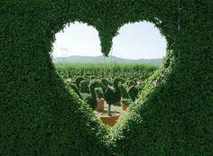 heart window