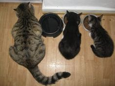 Premium cat foods grocery brand cat food. Which one is the healthiest to feed our cat? Read on.