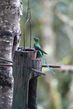 Se pueden observar hasta seis tipos diferentes de colibríes.