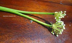 tumis bunga bawang, jamur, dan saus tiram #bungabawang