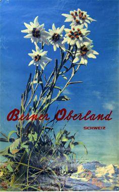 Steiner, Albert (Photogr.) Plakat - Berner Oberland Tiefdruck
