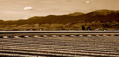 Monte Vista, CO   Potato field harvest.  Agriculture is so important to the San Luis Valley.