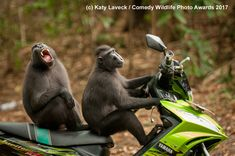 The Finalists For The 2017 Comedy Wildlife Photography Awards Are Hysterical - Digg